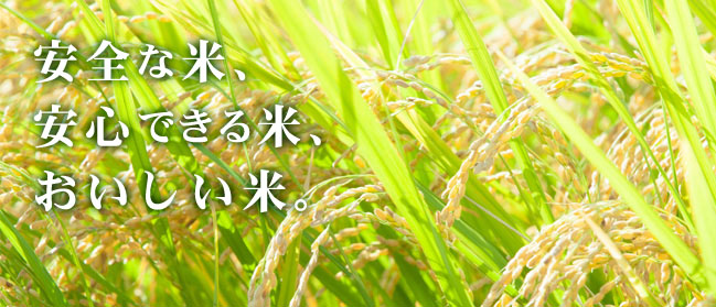安全な米、安心できる米、おいしい米 さとう農園は米づくりに励んでいます。